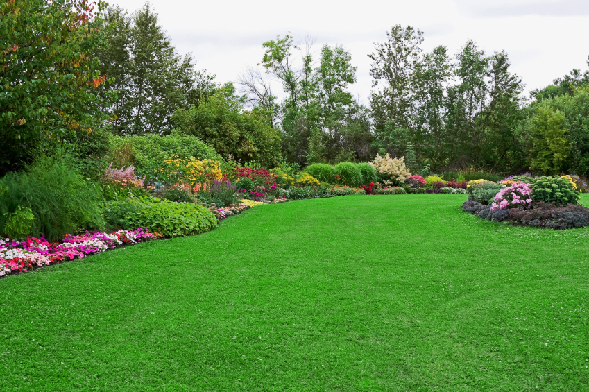 How to plan your spring landscaping organic nature lawn care for Best grass for landscaping